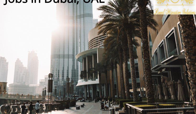royal migration solutions Dubai Jobs